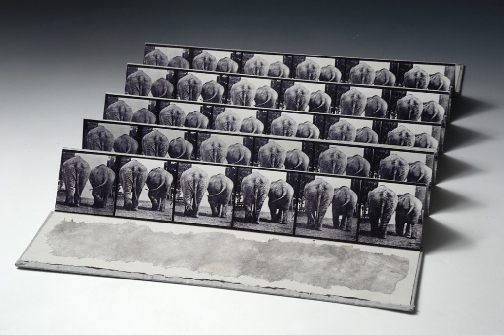 Muybridge Accordion, Elephant Walk 2