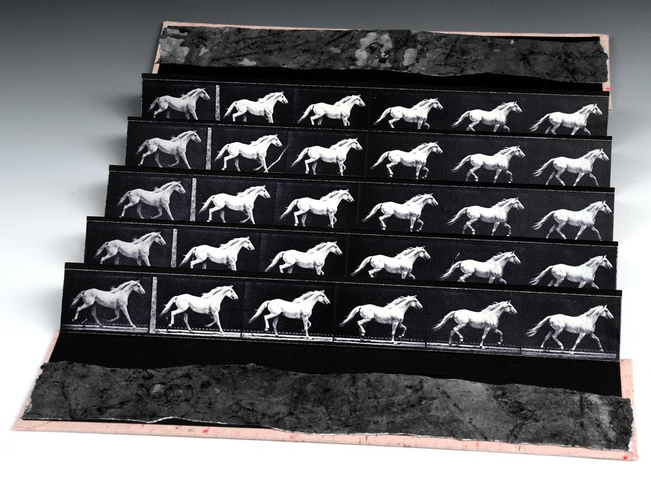 Muybridge Accordion, The Pretty White Horse
