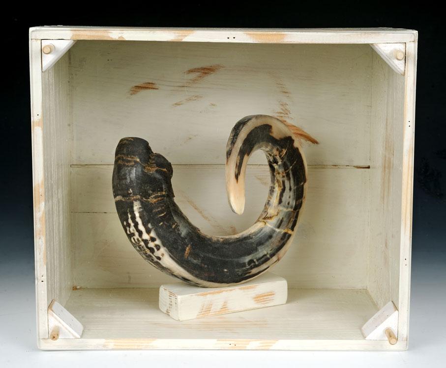 Odin's Horn, 10 1/2 x 12 1/2 x 7